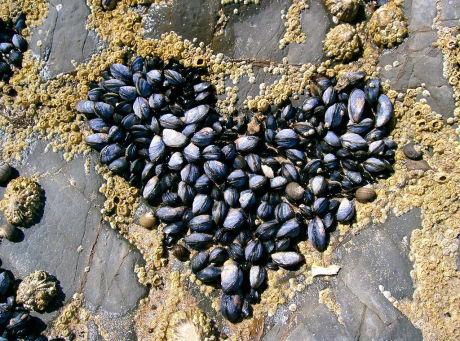 Heart 23 Ко дню Святого Валентина: Сердца, всюду сердца!