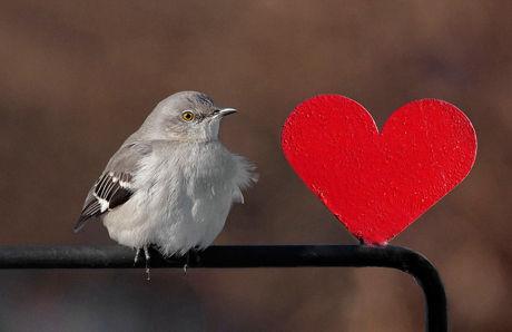 Heart 32 Ко дню Святого Валентина: Сердца, всюду сердца!