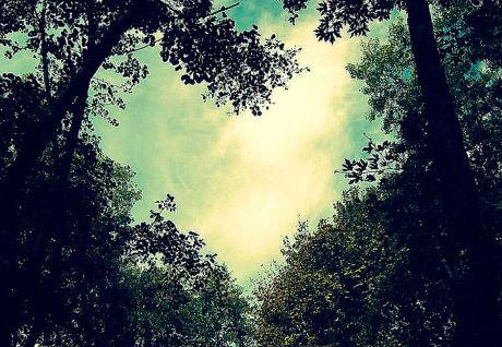Heart 35 Ко дню Святого Валентина: Сердца, всюду сердца!