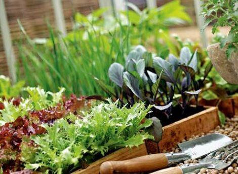 Как хранить овощи и фрукты на балконе