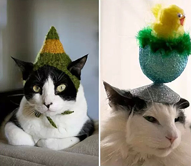 Котики и Шапочки